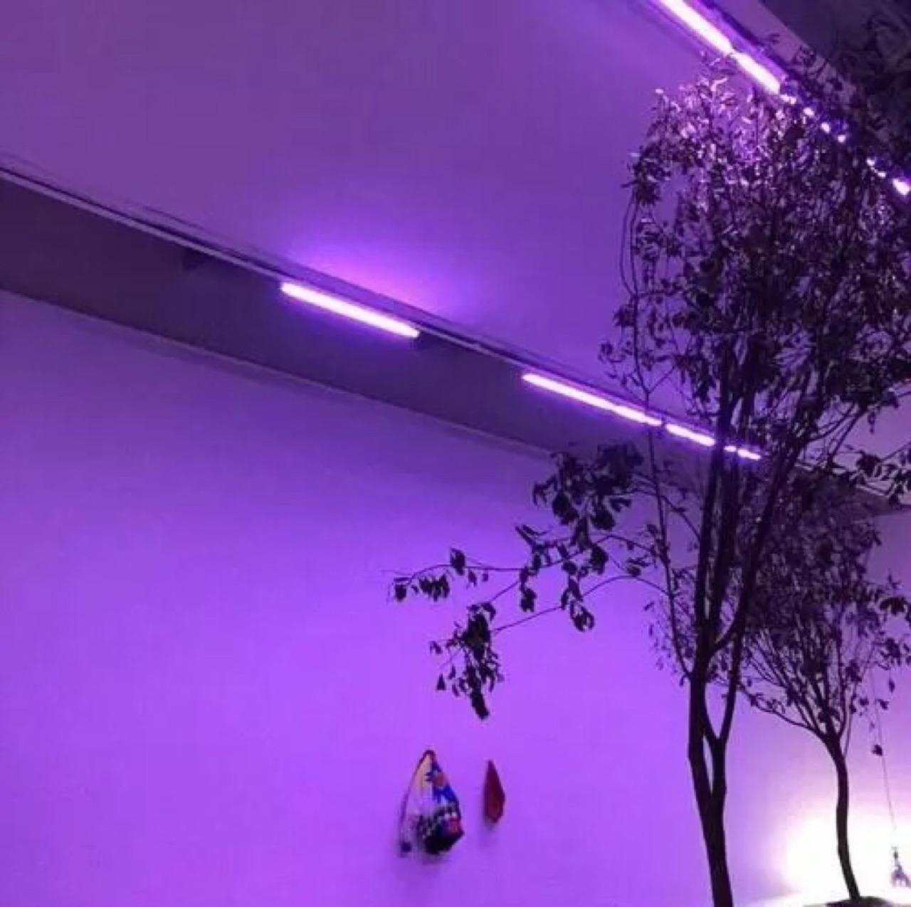 Фиолетовые стены — 135 фото примеров идей и варианты применения фиолетового в дизайне интерьера