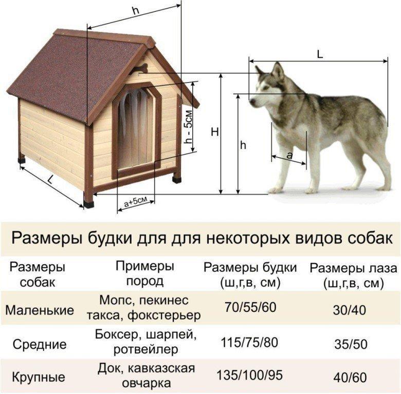 Как сделать вольер для собаки - 110 фото лучших конструкций для улицы и дома