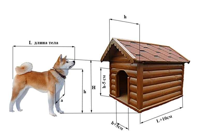 Будки для собак: виды, выбор и особенности размещения